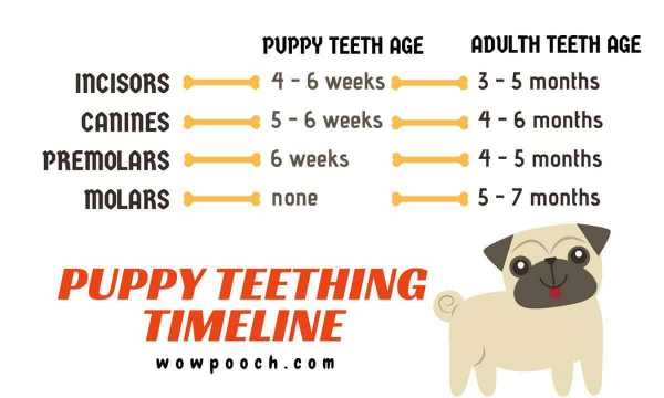 Puppy Teething chart