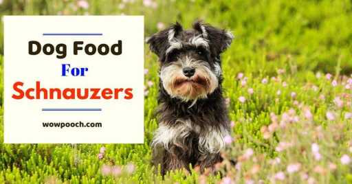 Dog Foods For Schnauzers