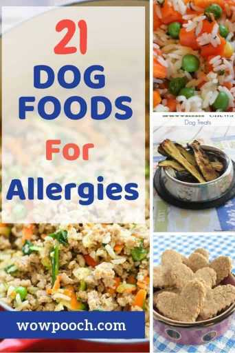 Dog Food Recipes For Allergies