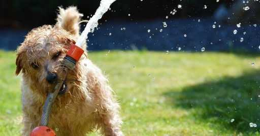 Ways To Protect Your Dog From Summer Heat And Heat Stroke