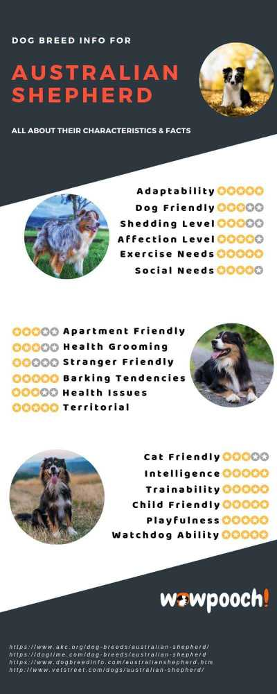 Australian Shepherd Dog Breed Information Infographic