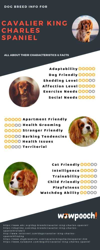Cavalier King Charles Spaniel Dog Breed Info Characteristics Facts