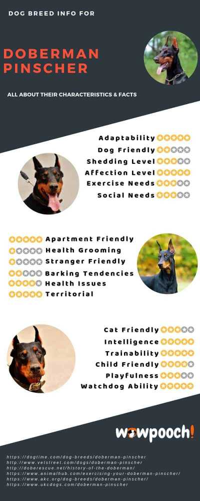 Doberman Pinscher Dog Breed Information, Pictures, Characteristics