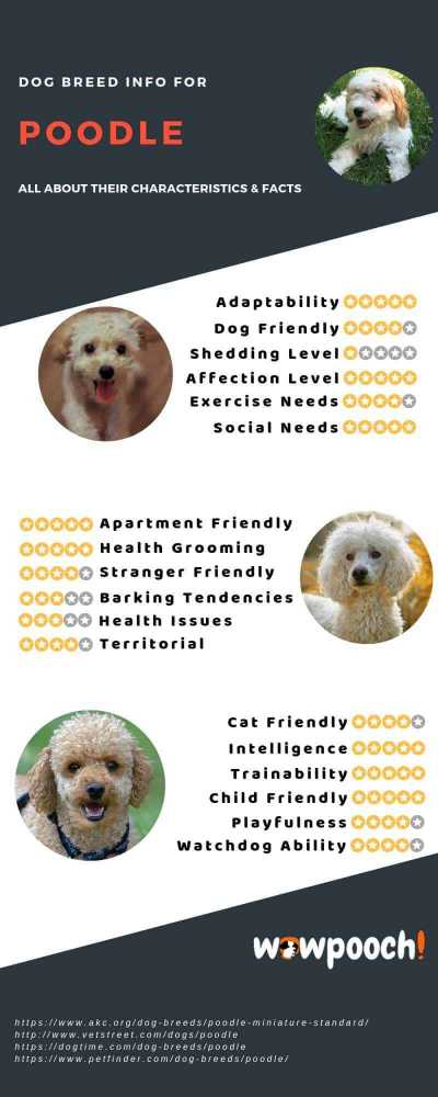 Poodle Dog Breed Information Infographic
