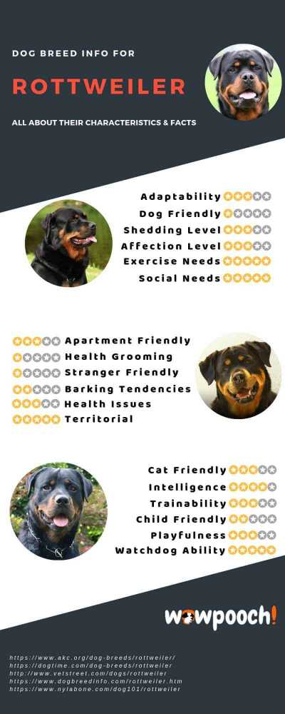 Rottweiler Dog Breed Information Infographic