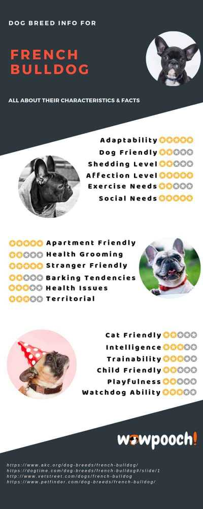 French Bulldog Breed Info Characteristics