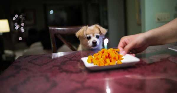 Dog Can Eat Mangoes