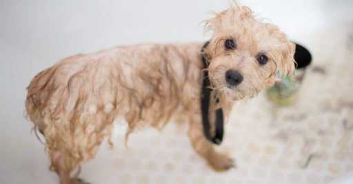 Dog Shampoos For Shedding
