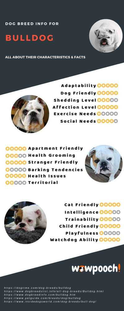 Bulldog Breed Information, Pictures, Characteristics