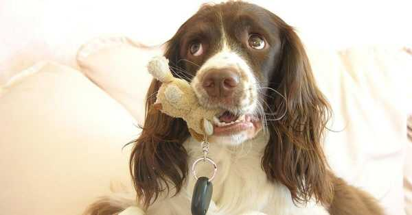 Steps To Correct If Your Dog Chewing Inappropriately