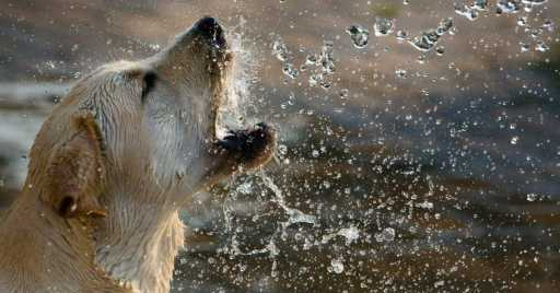 How Long Can A Dog Go Without Eating Or Drinking Water