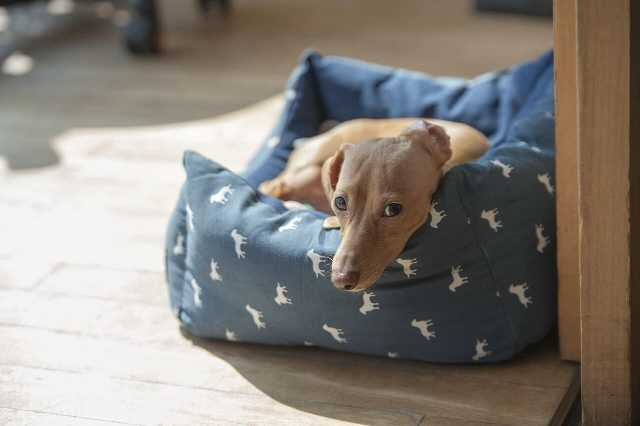 Hypoallergenic Dog Beds For Keeping Your Dogs Allergy Free
