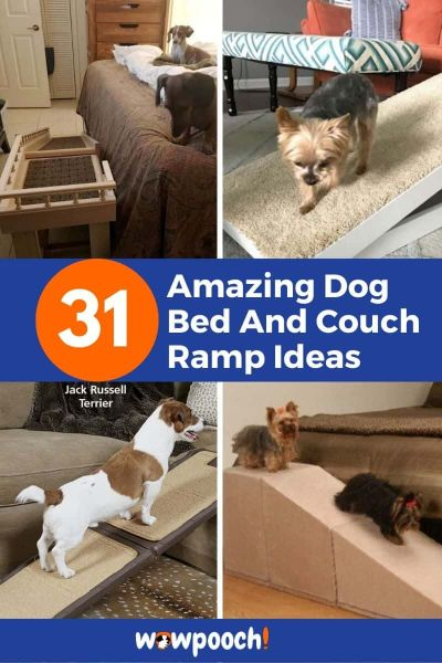 31 Dog Bed And Couch Ramp Ideas