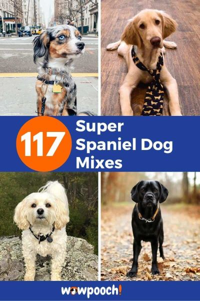 Spaniel Dog Mixes – The Perfect List Of Spaniel Dog Breeds