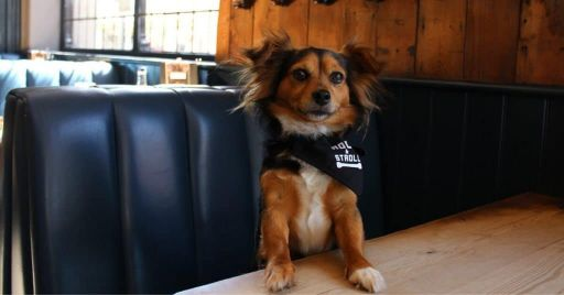 Dog-Friendly Restaurants