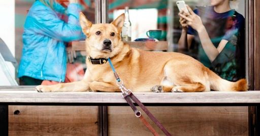 Best Dog Friendly Restaurants In Sacramento
