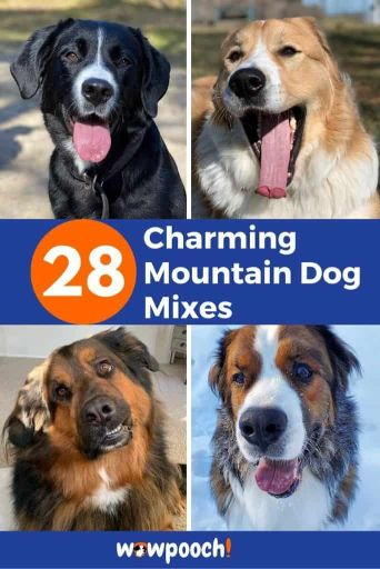 28 Mountain Dogs With Mixed Breeds