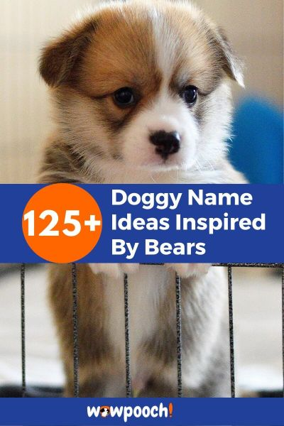 Dog Names Inspired By Bears