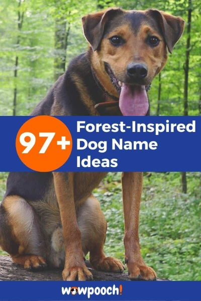 Forest-Inspired Dog Names