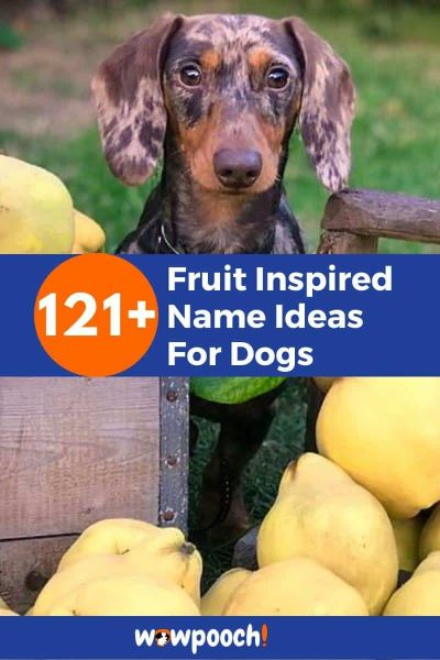 Fruit Names For Dogs