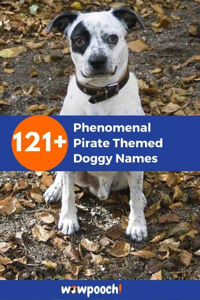 121+ Pirate Themed Doggy Names