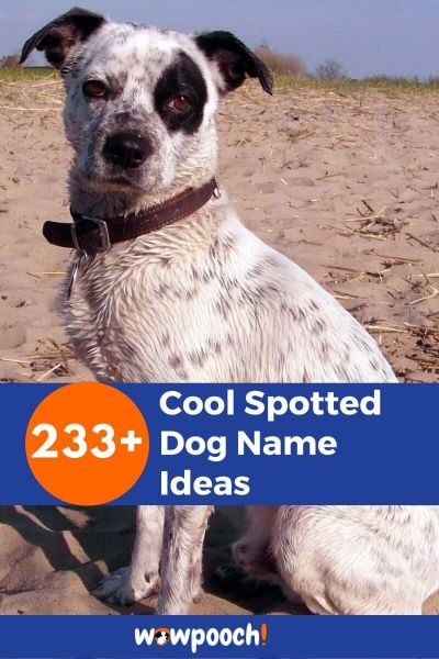 233+ Spotted Dog Name Ideas