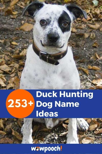 253+ Duck Hunting Dog Name Ideas