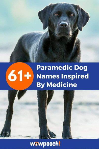 61+Paramedic Dog Names