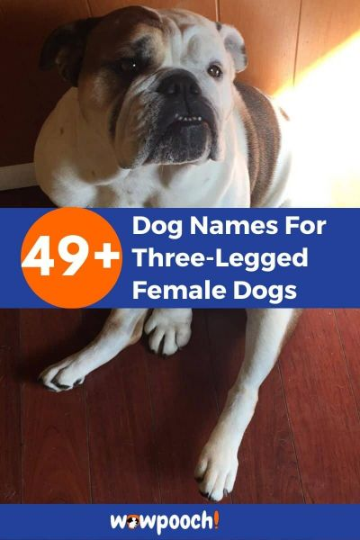 49+ Dog Names For Three-Legged Female Dogs