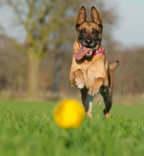 Top 85+ Golf Inspired Dog Names