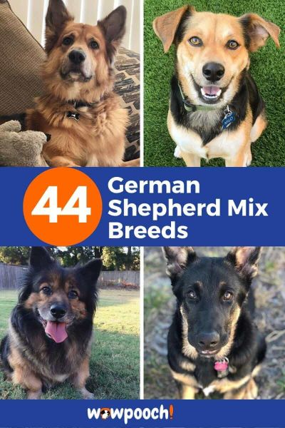 German Shepherd Mix Breeds